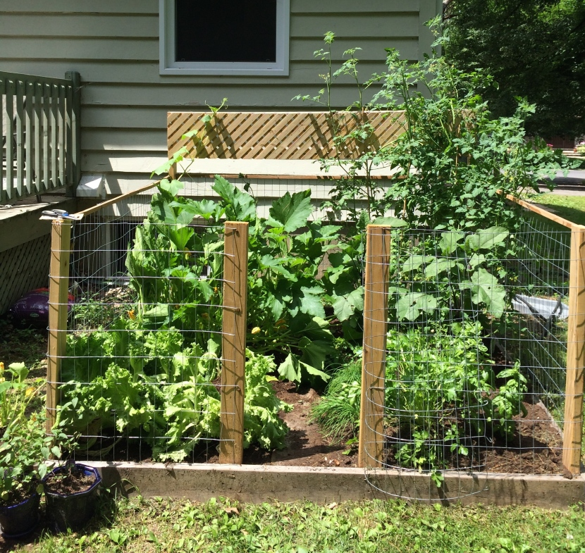 This photo is only a week old and the garden is already bigger!